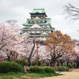 Osaka – Mùa hoa anh đào bắt đầu khi nào ?